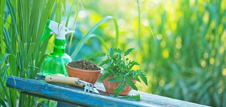 Why You Need Your Own Garden And How To Start Sexychew